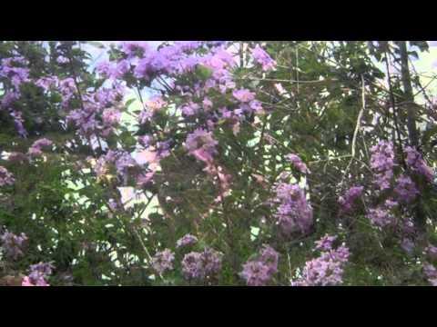 Folia de reis em Minas Gerais - Criei este vídeo com o Editor de vídeos do YouTube (http://www.youtube.com/editor)