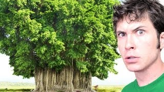 WEIRD HAWAIIAN TREE