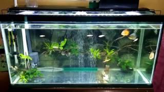 Video Aquarium tetap bening selama1 bulan lebih tanpa kuras MP3, 3GP, MP4, WEBM, AVI, FLV Juni 2019