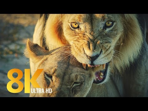 8K Wildlife of Kgalagadi Transfrontier Park, South Africa - Part #2