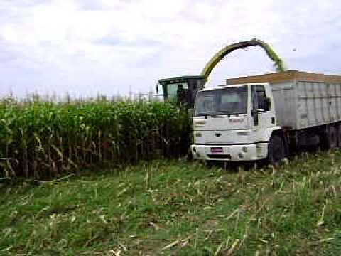 Silagem - Fazenda Sulina - Pantano Grande