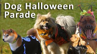 HALLOWEEN DOG Costume Parade by AprilsAnimals