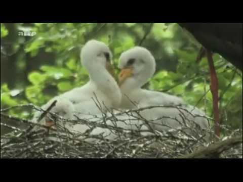 Beau documentaire sur la faune et la flore en Belgique