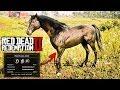 Red Dead Redemption 2 Melhor Cavalo Do Jogo Puro Sangue