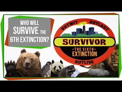 What animals are more likely to survive extinction?