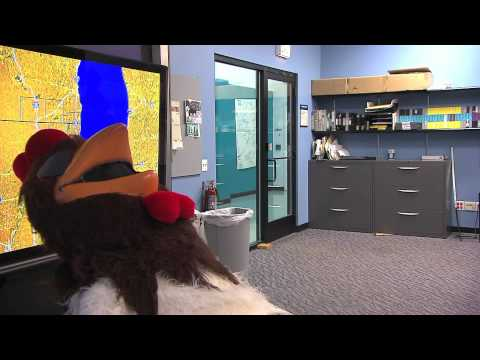 WGN Morning News The Rooster Spots- Paul Konrad Video