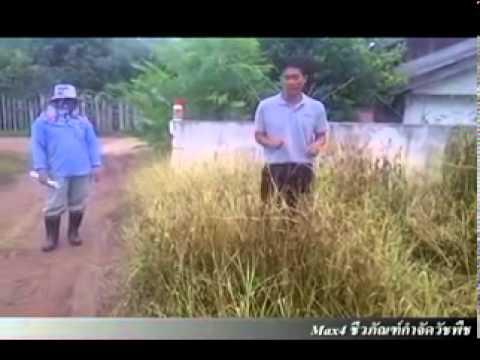 ชีวภัณฑ์ ยาฆ่าหญ้าปลอดสารพิษ (ผลการทดสอบ TH&EN )