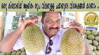 Video ഒരു കിലോയ്ക്ക് ആയിരം രൂപ വിലയുള്ള ചക്കയുടെ വിശേഷങ്ങൾ, Durian - The World's Smelliest Fruit MP3, 3GP, MP4, WEBM, AVI, FLV Oktober 2018