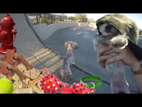 DOG AT SKATE PARK!