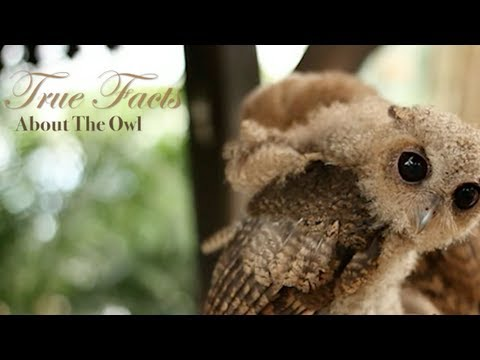 The Owl: True and Funny Facts!