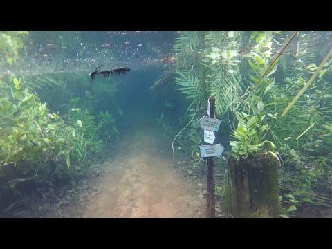 Szczena opada! Tak wygląda podwodny las po wylaniu rzeki!