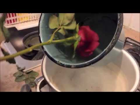 fai da te - come incerare una rosa vera
