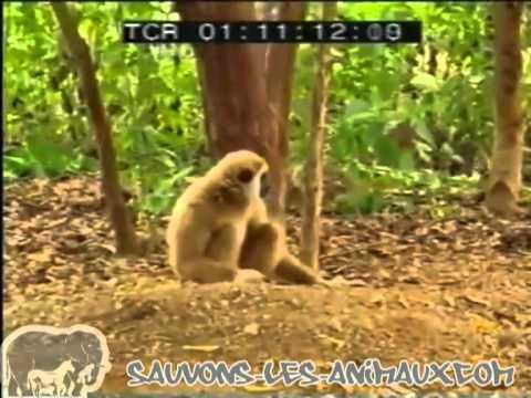 un singe s'amuse avec de bébé tigre