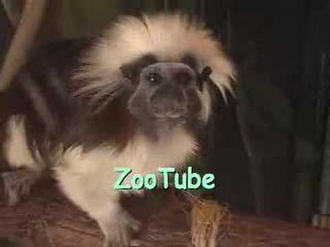 zootube - Just a little trip to the zoo. Mild on humor unless you have rugrats.