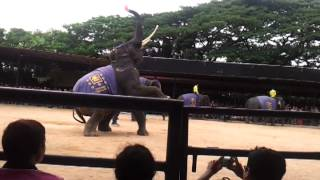 Travelling In Thailand (elephant Show - 3/6/2012)