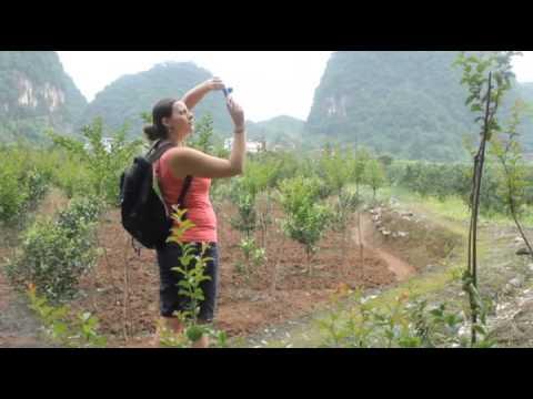Video of Yangshuo Dahutong Traditional Courtyard