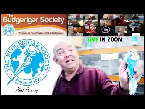 🔵LIVE|😱52 years on BUDGERIGAR HOBBY🐦| conference with the TOP BREEDER Phil Reaney 🇬🇧 Budgie Planet..