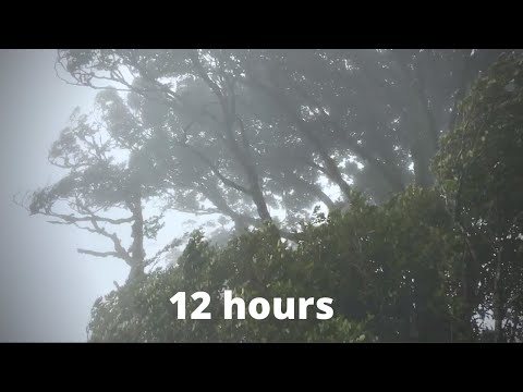 WIND SOUNDS for 12 Hours, Sound of Wind for Relaxing, Sleep, Study. Windy Sound
