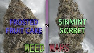 WEED WARS: Frosted Fruitcake vs SinMint Sorbet by Urban Grower
