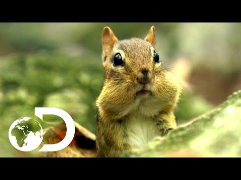 Cutest Animals   North America