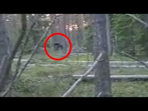 Bigfoot Seen in Russia (2015) Caught on Tape!!!
