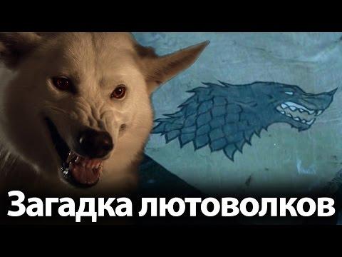 Загадка лютоволков Старк. Возвращение 7 сезона. Кто еще умрет в Игре престолов? (видео)
