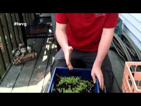Milk Crate Gardening – Quick Tip