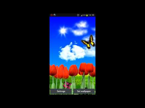 Video of Tulips live wallpapers
