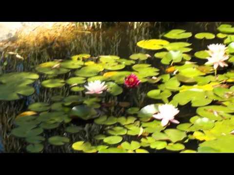 Tekst piosenki David Gray - Last Summer po polsku