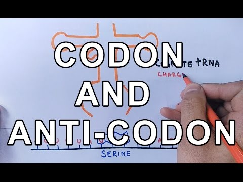 What is Codon and Anti-Codon ? Difference and Working Explained