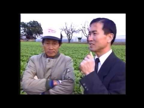 1990 Ethnic Business Awards Finalist – Business Less than Five Years – Brung Chung – Oriental Vegetable Grower