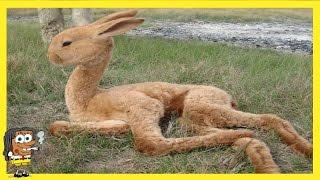 Video 5 animaux hybrides dont vous ignorez l'existence MP3, 3GP, MP4, WEBM, AVI, FLV Mei 2017