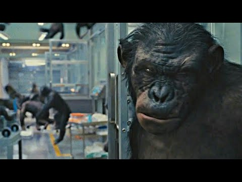 😵Caesar Frees Koba Scene | Rise of the Planet of the Apes (2011) | #ActionClips
