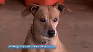 Prefeitura castra 1.200 cães para combater leishmaniose
