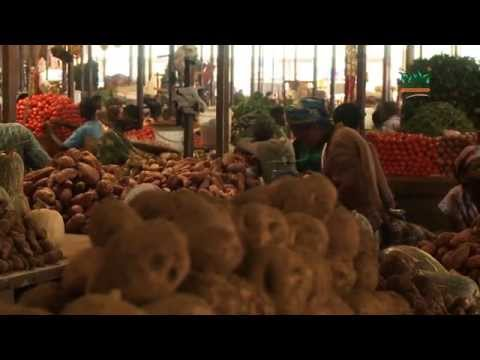 The Market Link to Africa - Domestic Horticultural Markets