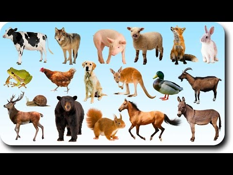 Video Learning Animals Names and Sounds for kids with More Finger Family Nursery Song for Children download in MP3, 3GP, MP4, WEBM, AVI, FLV January 2017