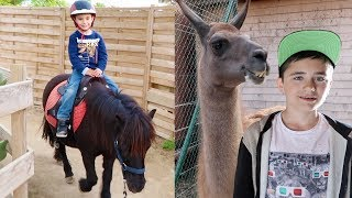 Video VLOG - SWAN FAIT DU PONEY & NÉO NOURRIT LES LAMAS - Parc d'attractions Kid's Island MP3, 3GP, MP4, WEBM, AVI, FLV November 2017