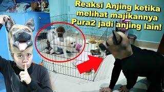 Video PRANK PURA2 JADI ANJING LAIN KE ANJING GW OLAF! *NGAKAK* MP3, 3GP, MP4, WEBM, AVI, FLV Juni 2018