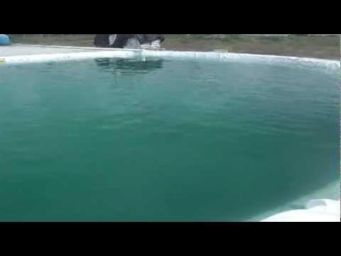 delfines san juan del rio