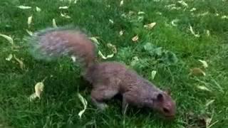Alimentando os esquilos no Public Park