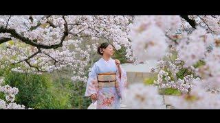 교토의 봄, 기모노와 벚꽃