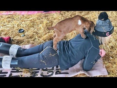 A new trend: Goat yoga