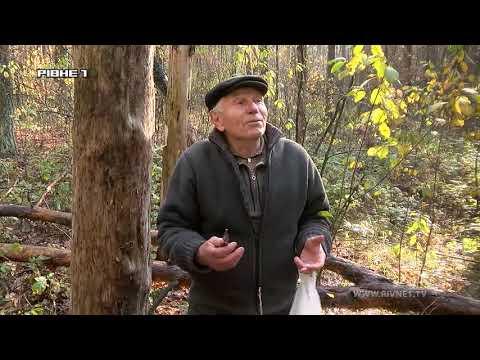 Чому в Новоукраїнці вирубують дерева? [ВІДЕО]