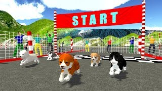 Nonton Cute Puppy Dog Racing Sim 2017 (by KidRoider) Android Gameplay [HD] Film Subtitle Indonesia Streaming Movie Download