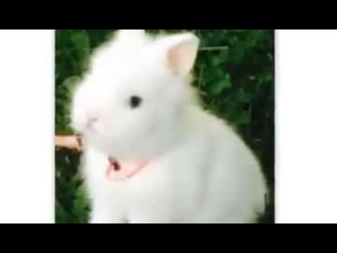 il coniglio - un ottimo compagno di vita