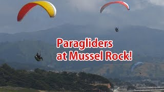 Here's a quick video I made about the paragliders that fly around my house at Mussel Rock in Daly City California.I used my new Panasonic GH5 to shoot in 4K 60fps slowed down to 24fps and also this video is in 21:9 aspect ratio so if you have an ultra-wide monitor, let me know how it looks!Lens used in video is Canon 85mm F1.8, highly recommended:http://hoalove.com/canon85mmMy main lens for the GH5:http://hoalove.com/sigma30mm43Get the GH5! I LOVE IT:http://hoalove.com/gh5Subscribe to my HighOnCameras channel here:https://www.youtube.com/channel/UCzexQIzfx4gXEJzNartGWkw-----------------------------------------Other Cool Android Videos you MUST check out:Best $20 I spent on a Car Charger:https://www.youtube.com/watch?v=SC_Grd18zbEJoin the HighOnAndroid VIP Fans List for free help from Max and discounts on Android accessories:http://highonandroid.com/newsletter.phpYouTube Audio Credist:Act Three by Audionautix is licensed under a Creative Commons Attribution license (https://creativecommons.org/licenses/by/4.0/)Artist: http://audionautix.com/