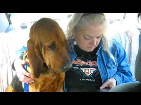 dogs at the holidays - Rescue Dogs Transport Miss Loretta Finds Her Forever Home For The Holidays 2012 http://www.youtube.com/user/RickKennedyFilms?feature=mhee.