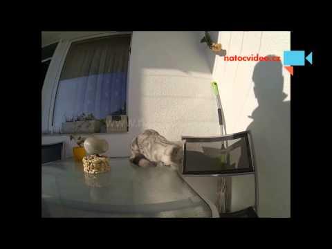 Naše kočka nesnáší mouchy