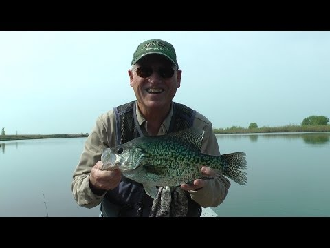 Best Ever Giant Crappie on video. Free Fishing Video on Species Will See Fish