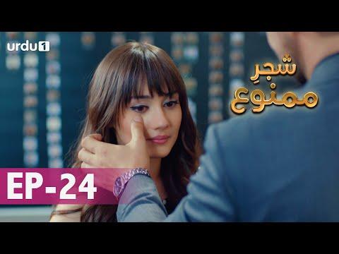 Shajar-e-Mamnu | Episode 24 | Turkish Drama  | Forbidden Fruit | Urdu Dubbing | 12 January 2021